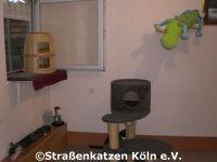 renovierung_datsche_3_1